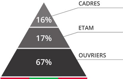 répartition cadres, etam et ouvriers